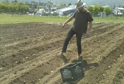 Its potato planting time!